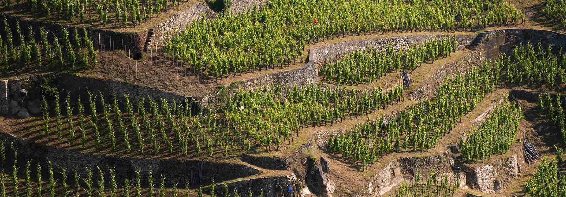 chemindesaintjacques.com-Geneve-Le-Puy-Vue-avec-fleuve-2-©-X.-Pages-3