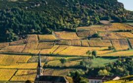 Un concept bien bourguignon : les climats